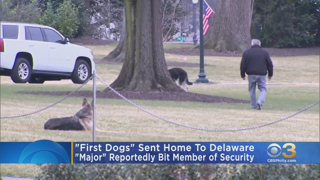 Biden dogs temporarily moved from White House after incident