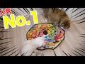 人気No.1の猫用おもちゃが大好評すぎたw