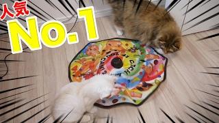 人気No.1の猫用おもちゃが大好評すぎたw thumbnail