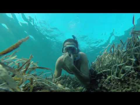 Plongée, Observation sous Marine en Apnée - Mer Méditerranée - Freediving, Snorkeling