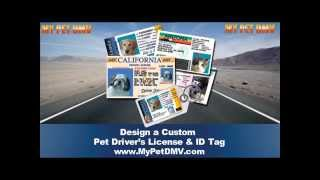 Pet Drivers License ID Tag - Design Yours Online