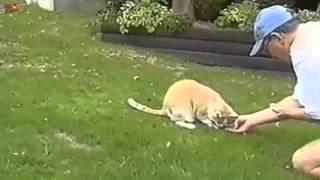 Video Divertenti Di Gatti E Cani