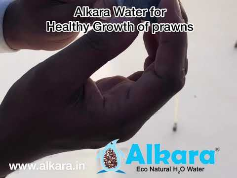 Alkara healthy natural h2O water  for prawns cultivation in aqua fields !