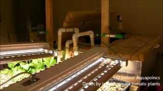 HD Indoor Aquaponics - Death by indeterminate tomato plants