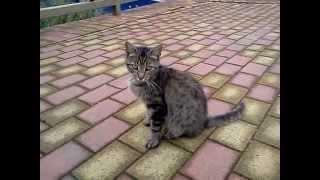 Funny cat&dog. Кот ласкается к псу.ПРИКОЛьный КОТОПЕС.милашки.обаятельные.