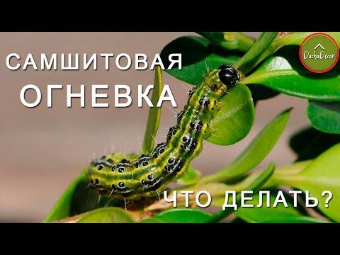 Вопрос: Как лечить укус гусеницы?