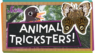 Animal Tricksters!