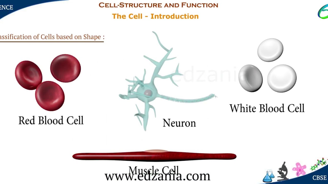 Cell Structure and Functions- The Cell Introduction