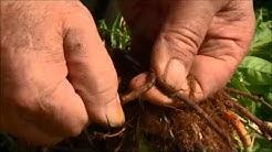 Faerbepflanzen - eine Bereicherung für unser Leben