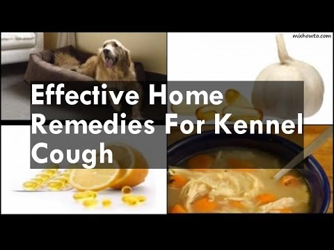 Home Remedies For Kennel Cough Youtube