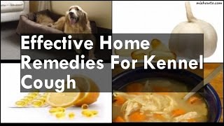 Home Reme Kennel Cough