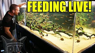 FEEDING THE BIG AQUARIUMS AND FISH