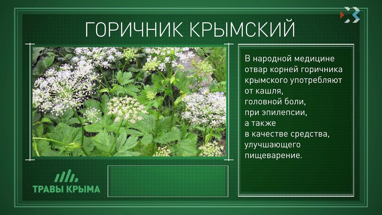лекарственные травы крыма фото и описание считанные