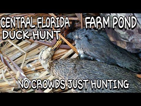 Duck Hunt Central Florida Farm Pond!