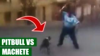 Hombre se Defiende de Ataque de Pitbull con Machete || VÍDEO VIRAL 2016
