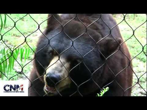 Two American Black Bears up close in 1080P HD - by John D. Villarreal