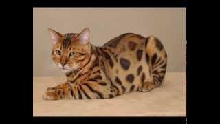 Корма для кошек феликс оптом