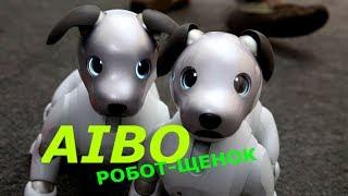 Айбо / Aibo / робот / щенок / милая собачка / sony / интересная игрушка / песик