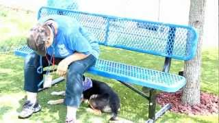 Volunteering To Help Dogs Get Adopted,, Think Alpha Dog