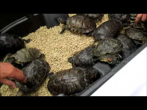 Reptile Expo Manchester New Hampshire Fall 2017 USA