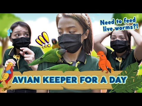 Hired Or Fired: Working At Jurong Bird Park For A Day