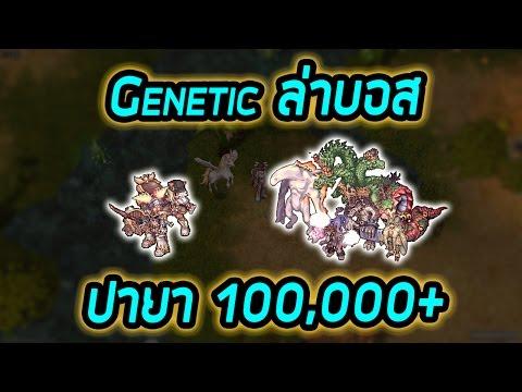 Genetic หักไม้บอส เก็บเวล ปายา เป็นแสน!!! (LIVE) | Ragnarok [ZicKarr]