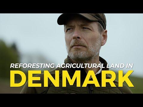 Denmark Reforestation: SKOVDYRKERNE | One Tree Planted