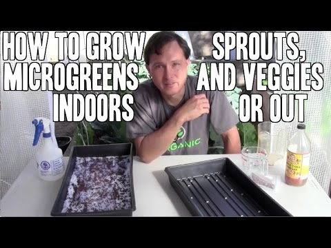 How to Grow & Use Sprouts, Microgreens & Green Vegetables Indoors or Out