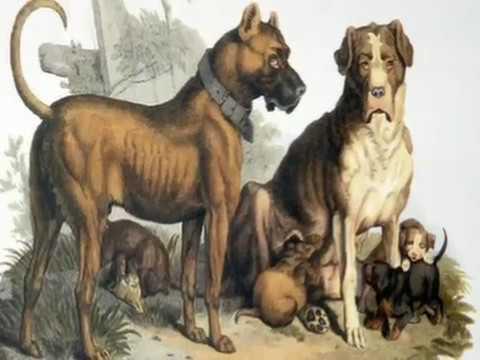 The Mastiff - Documentary