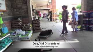 German Shepherd Vader! Amazing Video! Best Dog Training In Virginia
