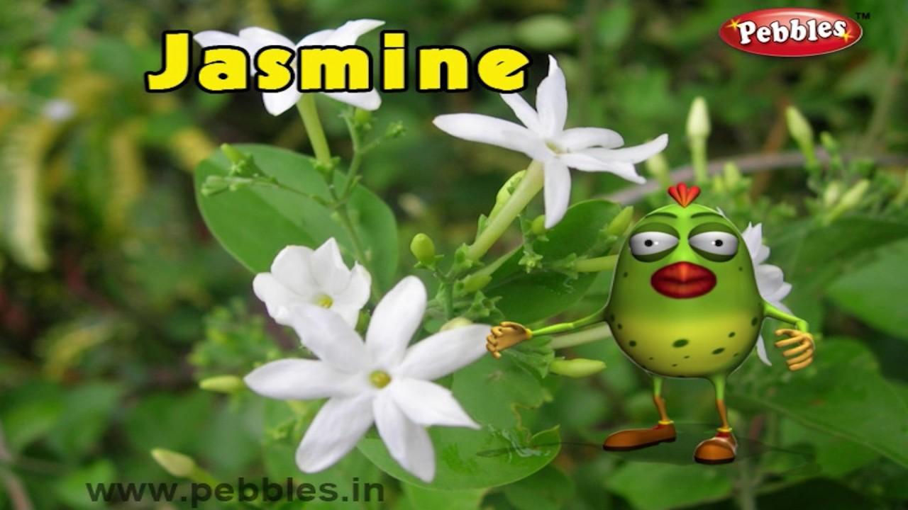 Jasmine Rhyme 3d Nursery Rhymes With Lyrics For Kids Flower
