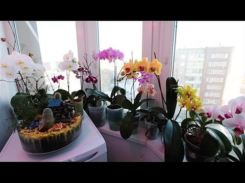 Как вырастить на балконе целый сад орхидей