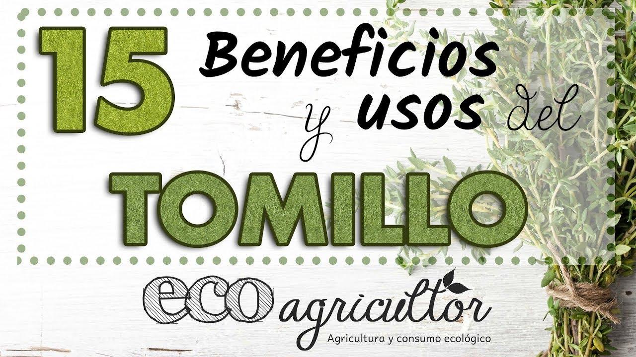 Aceite Esencial De Tomillo Propiedades Cómo Usarlo Y Contraindicaciones Ecoagricultor