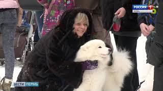 В Перми прошла благотворительная акция «Собака-обнимака»