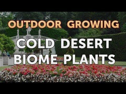 Cold Desert Biome Plants Youtube