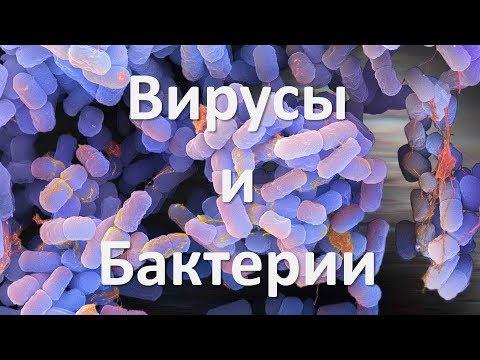 9. Бактерии и Вирусы (5 класс) - введение в Биологию