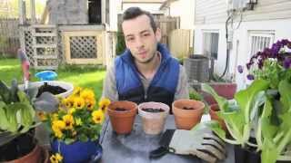Ep 2 - Planting Zucchini from Seed