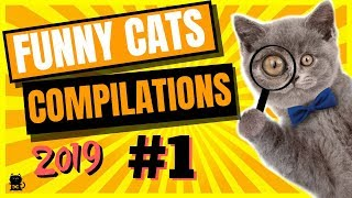 Funny Cats Compilation - Funny Cats Will Make You Laugh Your Head Off ...