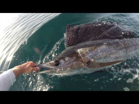 a Sailfish summer, Stuart, Florida 2015 (watch in HD)