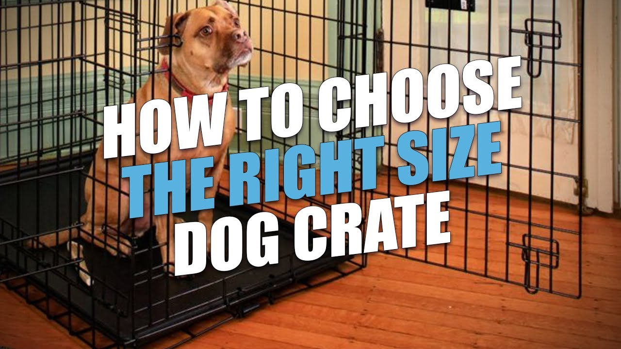 Dog Crate Sizes How To Size A For Perfect Fit You