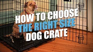 How to Choose the Right Size Dog Crate (for a Perf...