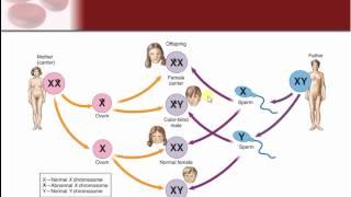 Chapter 24 - Genetics and Genetic Disease