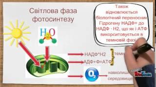 Фотосинтез. Значення фотосинтезу