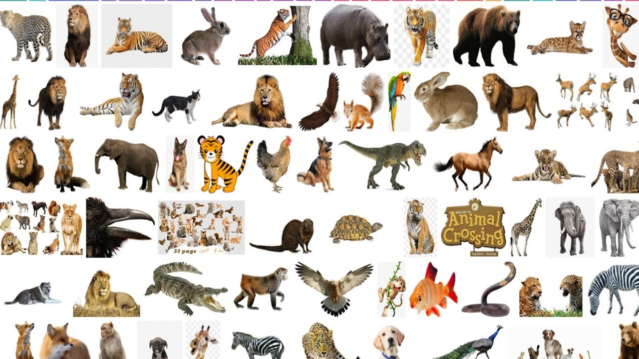 150+ Animal Png Stocks Download Now Zip File - Cb Background Image - Fast Comment this Videos