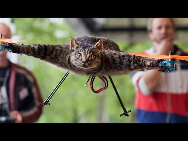 21 Cats You Won't Believe Actually Exist! (#2)