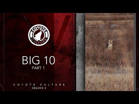"Coyote Hunting: 3 Coyotes – CC Season 5 E12 ""Big 10 Part 1"""