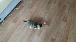 Котенок 3 месяца футболист. Прикол