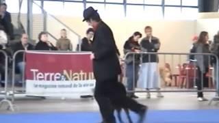 Flanagan et Plinio - Dog Dancing - 2ème Tour.
