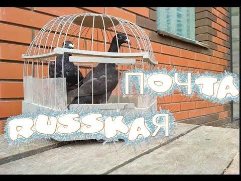 Русские почтовые голуби. | Породы голубей