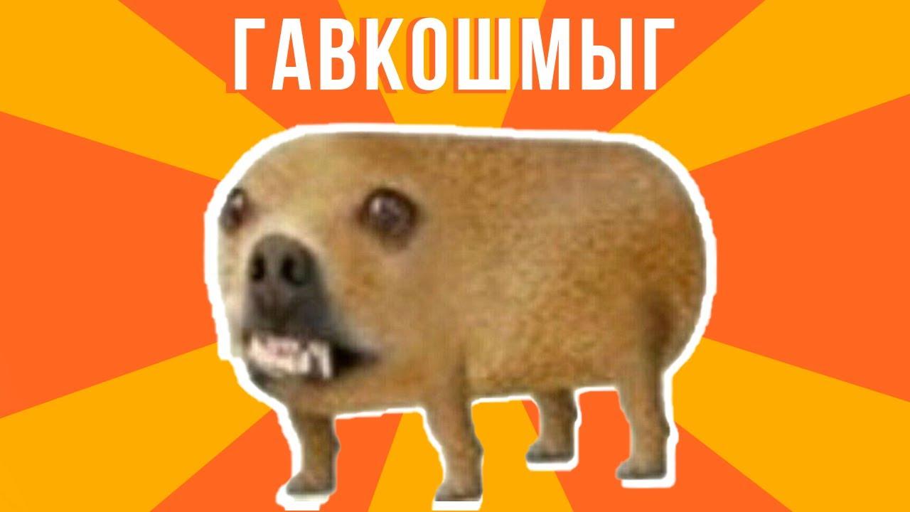ГАВКОШМЫГ))) Приколы | Мемозг 840